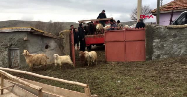 Ahır yangınında hayvanları telef olan çiftçiye küçükbaş desteği