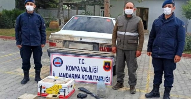 Otomobille şahin avına 13 bin 692 lira ceza