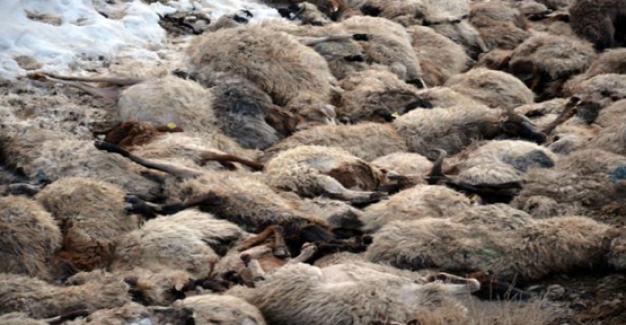 Konya'da yaklaşık 350 koyun telef oldu