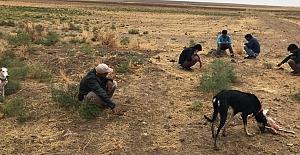 Kulu'da köpeklerle tavşan avlayan 5 kişiye 14 bin 355 lira ceza kesildi
